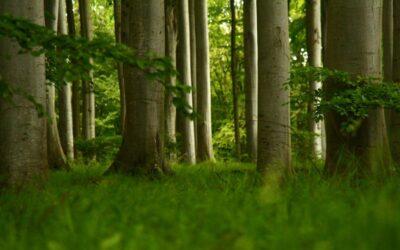 Wieso meine erste Baummeditation ein bisschen peinlich war