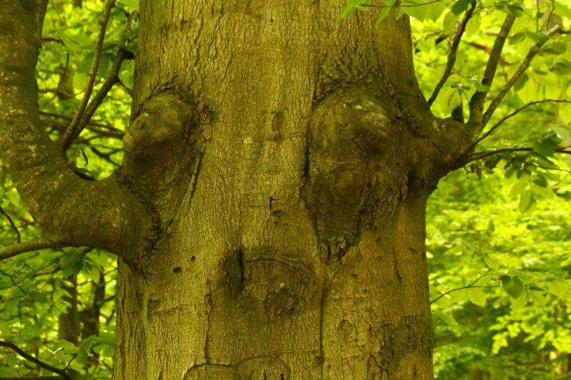 Lerne vom Wald!